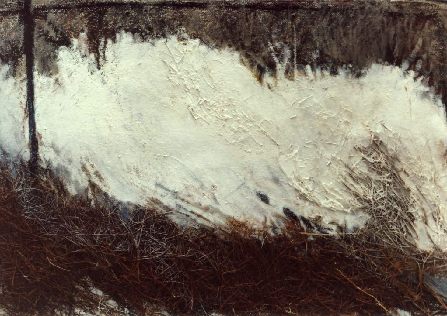 Imprints of Nature